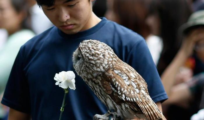 Служащий токийского зоопарка Уэно с совой на панихиде по животным, умершим в зоопарке за прошедший год.