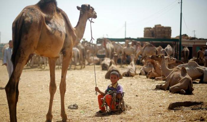 Верблюжий рынок Биркаш, Каир, Египет.