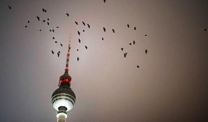 Птицы летают около телебашни в Берлине, Германия.