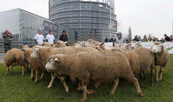 Демонстрация пастухов, обеспокоенных участившимися нападениями волков на стада овец, возле здания Европейского Парламента в Страсбурге, 26 ноября 2014.