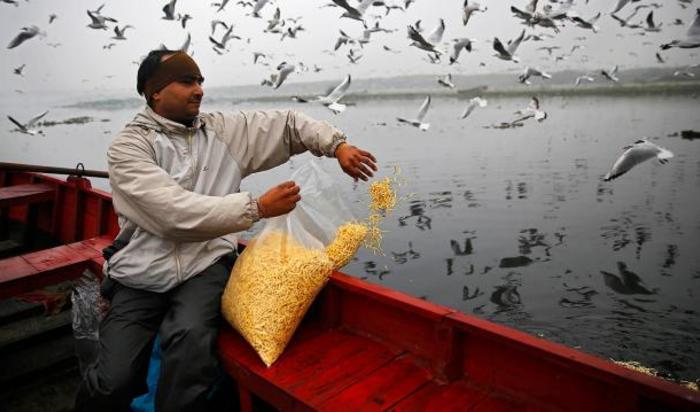 Местный житель кормит чаек в Нью-Дели, Индия 18 декабря 2014.