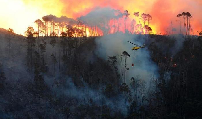 Лесной пожар в заповеднике Токай, Кейптаун, ЮАР.