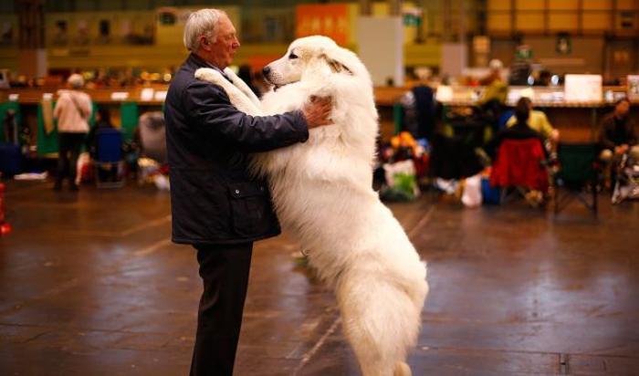 Выставка собак в Бирмингеме, Великобритания 5 марта 2015.