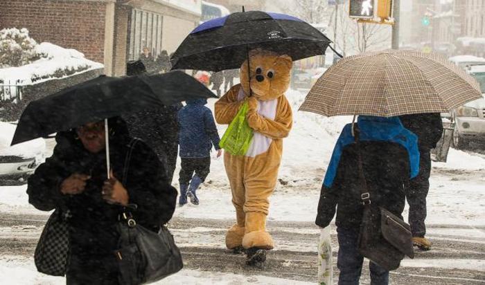 Пешеход в костюме медведя в Нью-Йорке, 5 марта 2015.