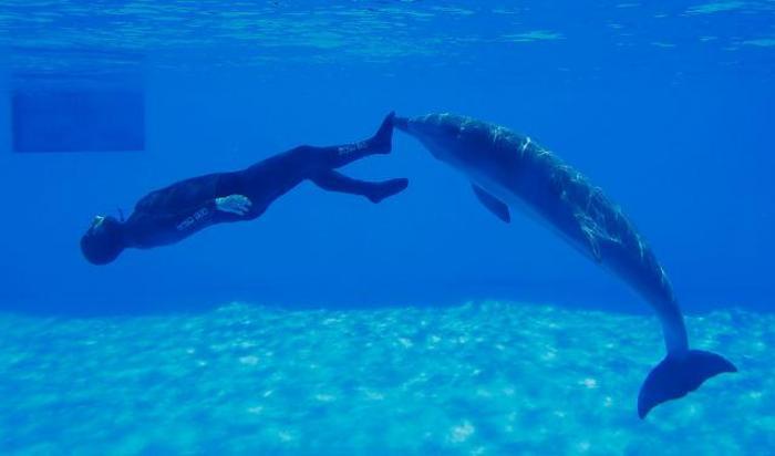 Симон Арригони пытается установить рекорд по дайвингу (его подталкивает дельфин) в Риме, Италия 28 мая 2015.