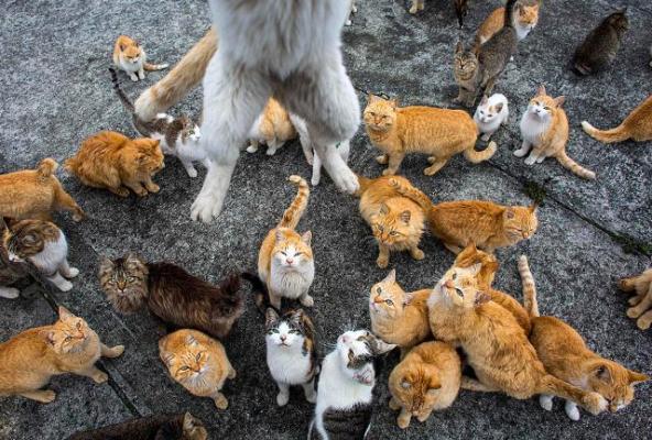 Кошачий рай на земле