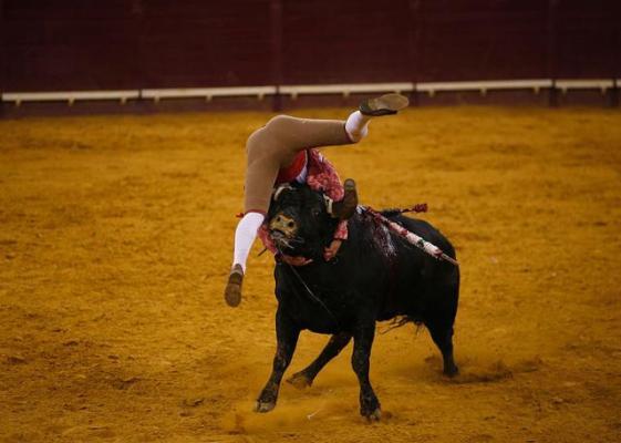 Кровавая испанская коррида
