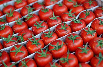 Турецким томатам бой! Кто накормит Россию помидорами
