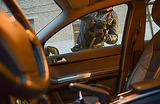 Сага о гонщике. Водителя, устроившего погоню за борсеточниками, обсуждает Рунет